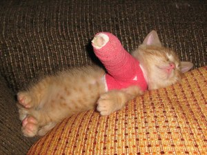 Broken Arm Kitten